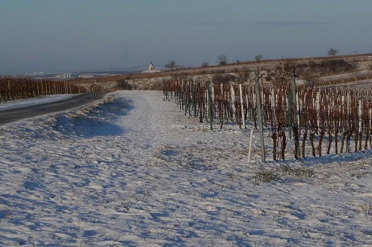 Lednová vinice