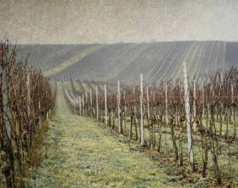 Leden - vinice