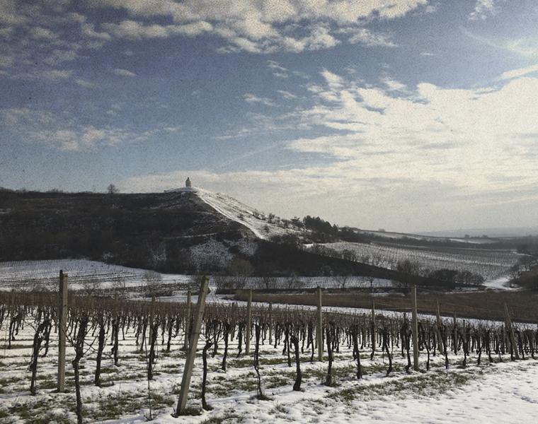 Zimní vinice